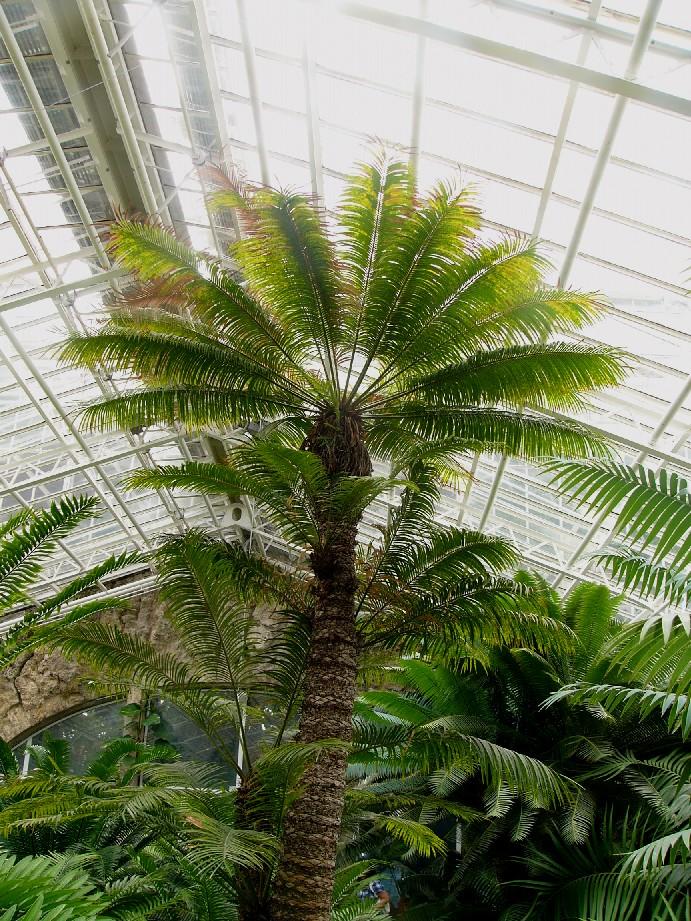 Pflanzen mit palmenartigem stamm und farnartigen blättern