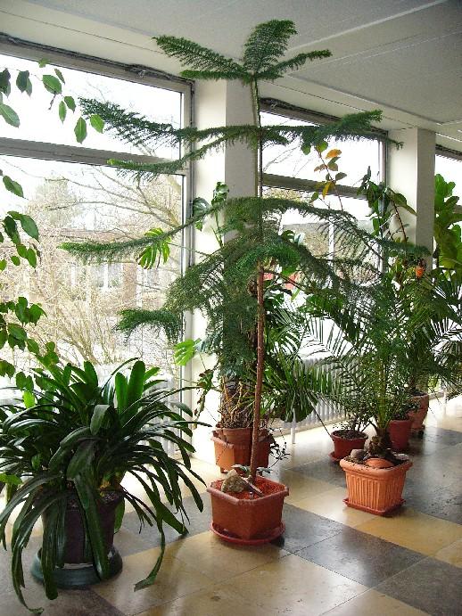 coole gro e zimmerpflanzen pflegeleichte zimmerpflanzen vorschl ge archzine gro e. Black Bedroom Furniture Sets. Home Design Ideas