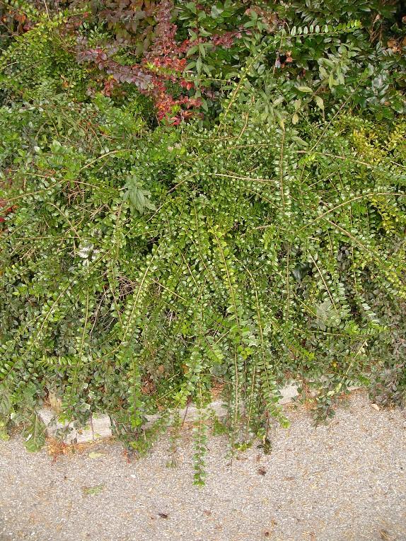 Boden Blatt flaechig